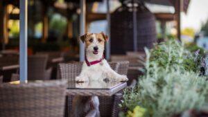 Dog-Friendly Pubs Devon Dawlish-min