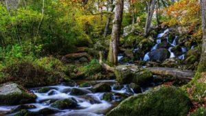Becky Falls Ancient Woodland Park-min