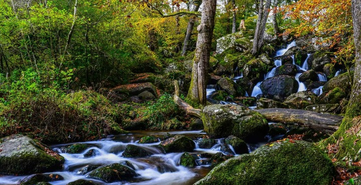 PhotoBecky Falls Ancient Woodland Park-min
