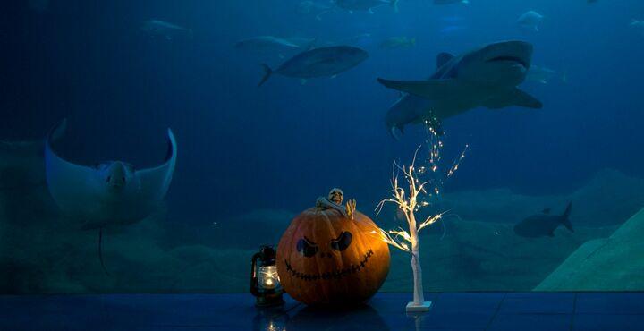 PhotoNational Marine Aquarium Halloween-min