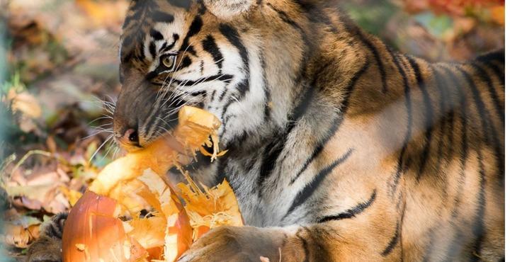 PhotoPaignton Zoo Halloween-min
