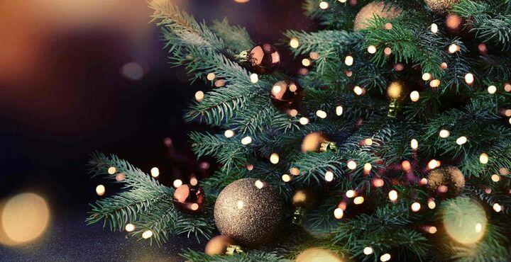 PhotoEnjoy A Christmas Break At The Langstone